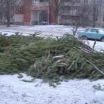 Дания – с изхвърлените елхи след празника могат да се отопляват 3 хиляди къщи