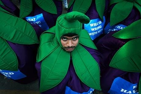 В Индия блокираха регистрацията на Greenpeace