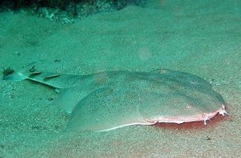 """В 20-километровата зона около """"Фукушима"""" 40% от рибата е заразена с цезии"""