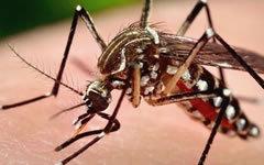 От МААЕ предложиха начин за борба с разпространението на вируса Зика