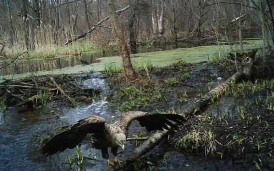 Това, което учените са открили в Чернобилската гора, шокира целия свят