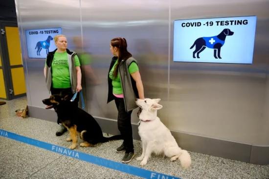 COVID-19 – Започна пилотен проект за тестване на пътниците на летището в Хелзинки със специално обучени кучета