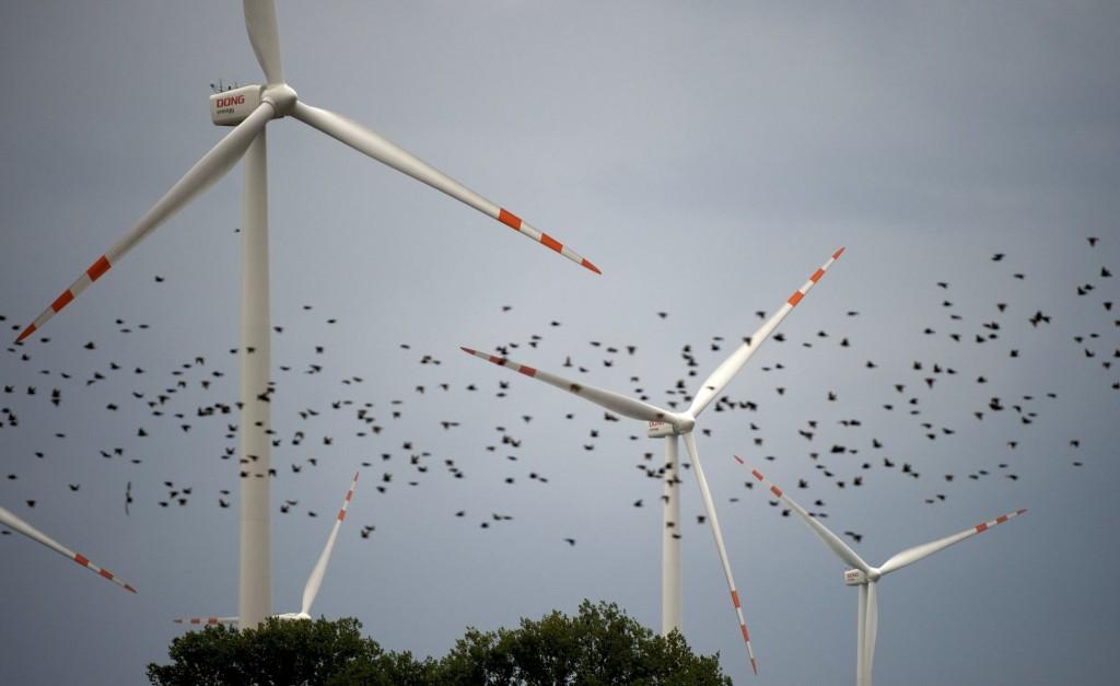 Екология – Вятърната енергетика и съдбата на птиците